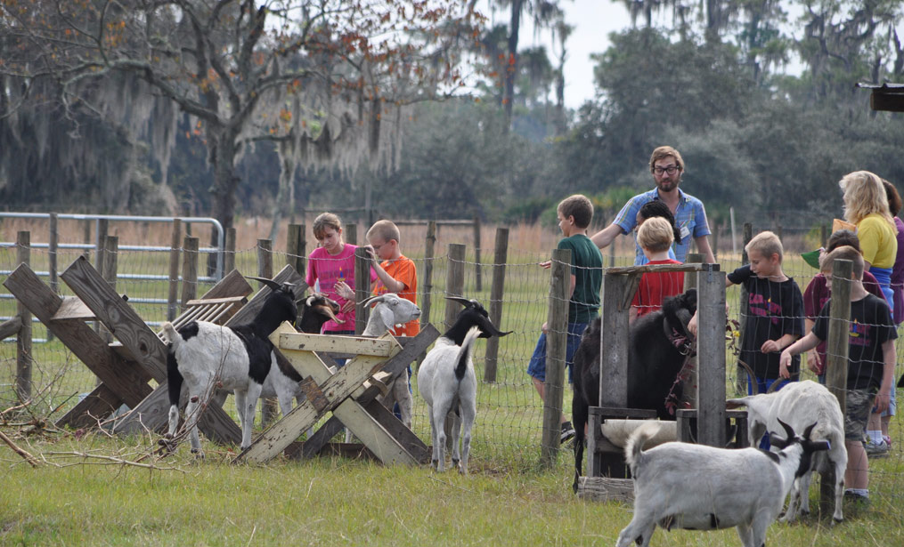 Sustainability Training Central Florida - Gardening Polk County - Permaculture Lake Wales - HEART Institute Lake Wales, FL - heart-elementary-field-trip-animals-3