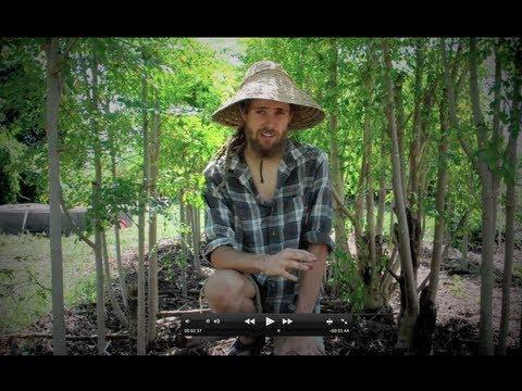 Moringa:  The Miracle Tree