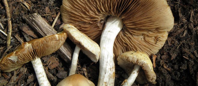 The Fungus Among Us – An Astounding Discovery