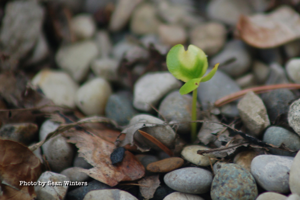 heart-sprout-rocks