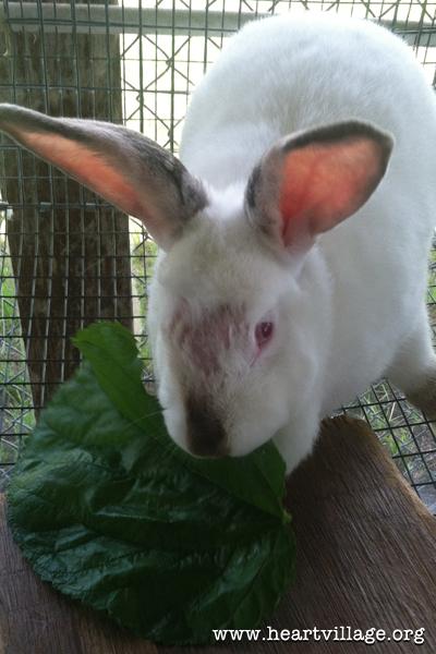 heart-mulberry-rabbit