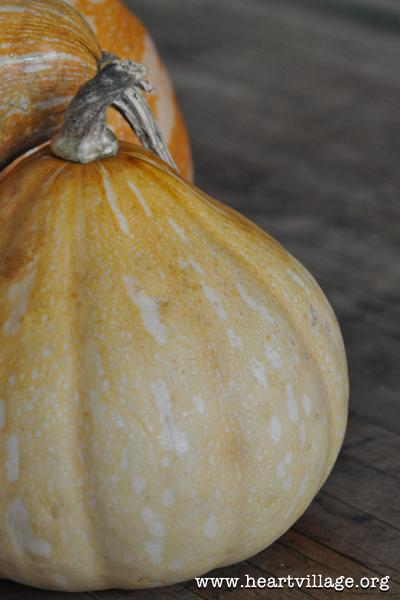 heart-seminole-pumpkin